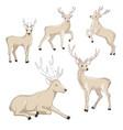 cute deer cartoon set wildlife character vector image