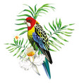 multicolor parrot with tropical plants and vector image vector image
