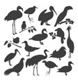 set of birds silhoettes vector image vector image
