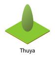 thuya icon isometric style vector image vector image