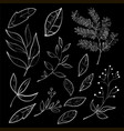 Collection of foliage and branches vector image