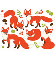 Foxes Set vector image vector image