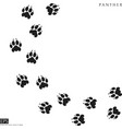 panther paw prints silhouette vector image vector image