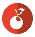 sweet cherry fruit red circle shadow vector image