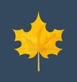 autumn yellow maple leaf season nature color plant vector image