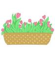 cartoon pink tulip in long flower box vector image