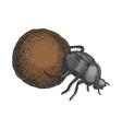 dor bug beetle color sketch engraving vector image vector image