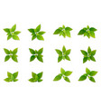 green realistis leaf set vector image
