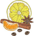 lemon slice tangerine spices and coffee beans vector image