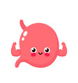 strong healthy happy human stomach vector image vector image