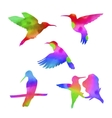 watercolor colibri set vector image