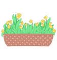 cartoon yellow tulip in long flower box vector image