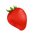 delicious organic strawberry with small leaves vector image