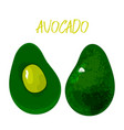 healthy organic avocado vector image