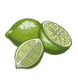 lime full color realistic vector image