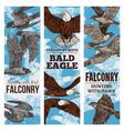 predatory birds sketch eagle or falcon hunt vector image vector image