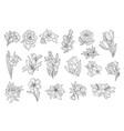 set beautiful monochrome flowers lily tulip vector image