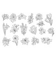 set of beautiful monochrome flowers lily tulip vector image