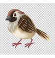 sparrow bird on transparent background vector image vector image