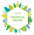 tropical leaves and plants sguare frame vector image