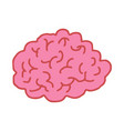brain drawing isolated brains bends on white vector image vector image