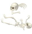 Human skeleton and bones different parts of body vector image
