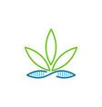 marijuana genetic leaf science creative logo vector image vector image