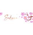 sakura blossom cute pink cherry flowers japanese vector image