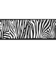 background with zebra skin vector image vector image