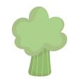 fresh broccoli vegetable food cartoon icon style vector image