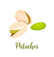 pistachio nuts isolated on a white background vector image