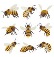 bees set winged insect flying sitting creeping vector image
