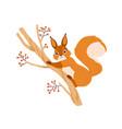 cute happy squirrel on rowan tree branch adorable
