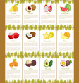 pomelo and kumquat posters vector image