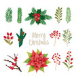 set of winter plants flowers and berries could be vector image