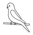 Budgerigar- logo for exotic bird business vector image