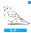 bullfinch learn birds coloring book vector image vector image