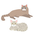 cats laying on floor set kittens fluffy kitty vector image