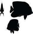 angelfish silhouette vector image