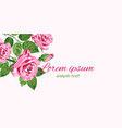 bright pink roses greeting card with place for vector image vector image