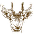 engraving of reindeer head vector image