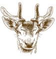 engraving reindeer head vector image