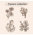 Flowers sketch elements vector image vector image