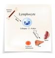 Limbo leukocytes in bone marrow Dieback vector image