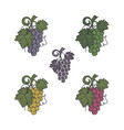 set of grapes icon different colors and style vector image