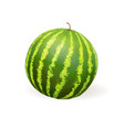watermelon realistic vector image
