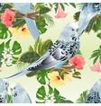 seamless texture three birds budgerigars vector image vector image