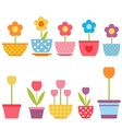 set colorful flowers in pots vector image