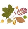 Set of autumn leaves Rowan leaf maple leaf vector image