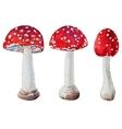 Watercolor amanita mushrooms vector image